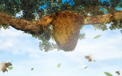 1001 Benefits Of Tualang Honey No Other Types Of Honey Have